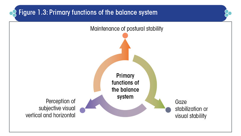 Primary functions of the balance system