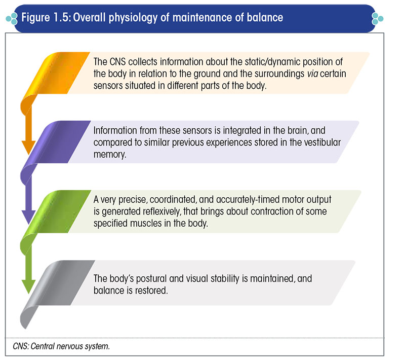 Overall physiology of maintenance of balance