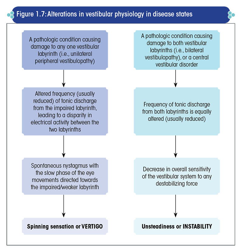 Alterations in vestibular physiology in disease states