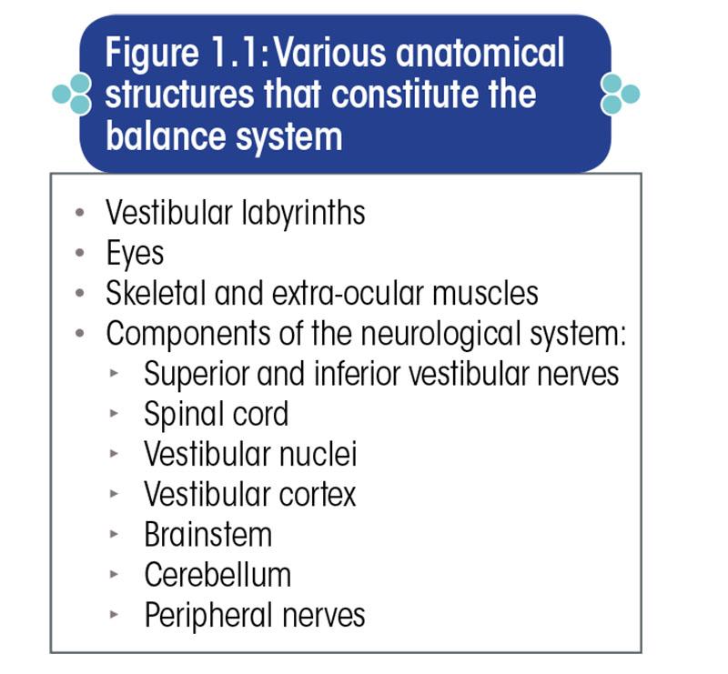 Various anatomical structures